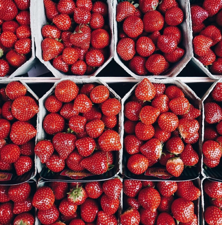 Strawberry Lab Tatum Likes To Write