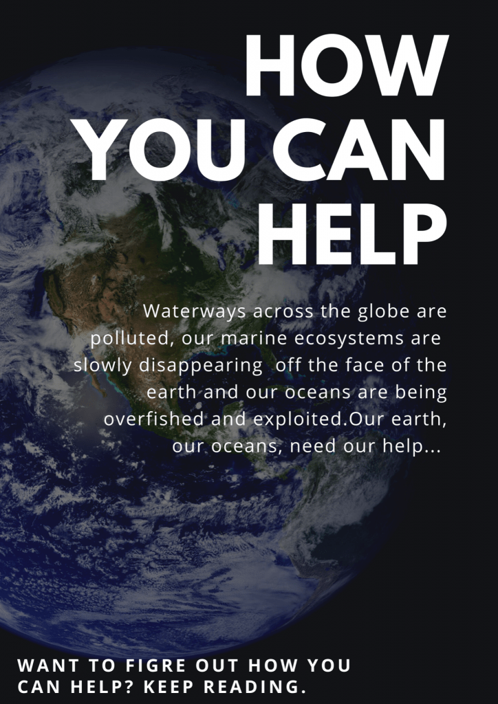 How You Can Help our Oceans: An Infographic