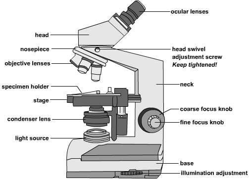 polarizing microscope parts and functions pdf