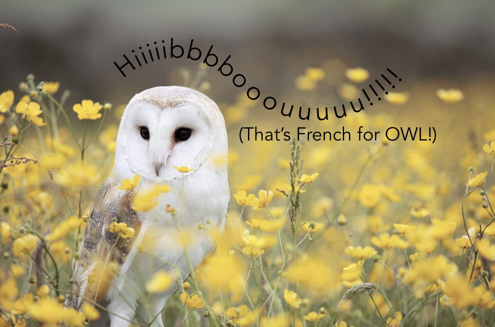 Hibou!!! | Flow Through School