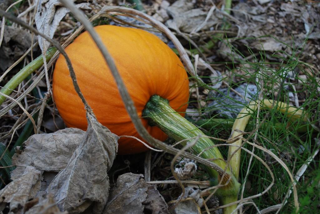Alfred awaiting harvest :)
