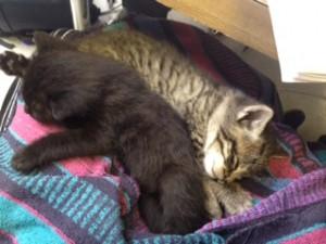 kitten school 4