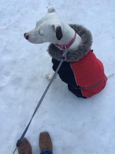 Snow puppy Sophia at 100 Mile Falls