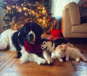 Vedder & Burton christmas