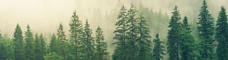 Pinetree EduBlog Portal