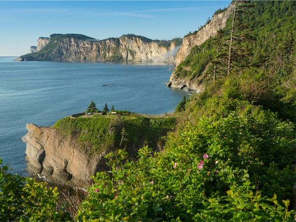 Vegetation of Canada's Regions – Tatiana's Blog