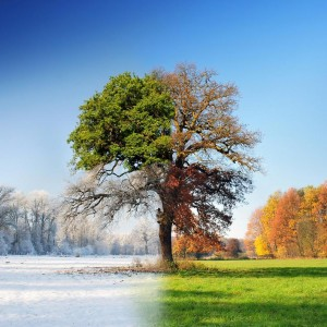 winter-autumn-spring-summer-tree