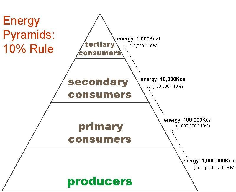 Energy Pyramid Percentages The plants of the Aust...