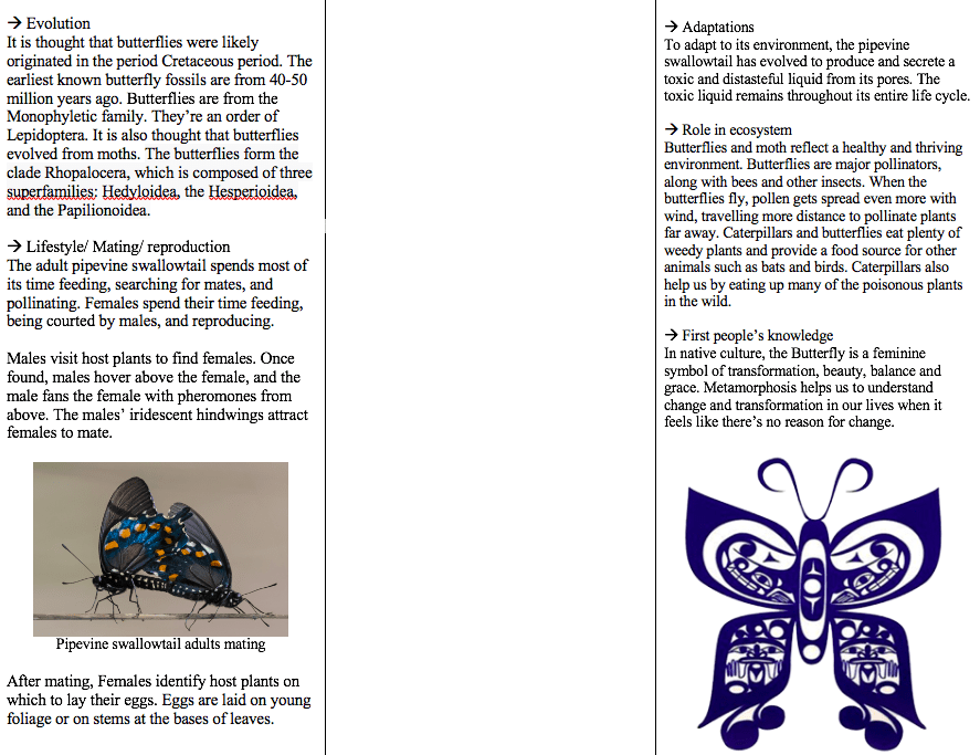 PANFLET PAGE 2 (BACK)