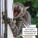 funny-cat-doesnt-want-to-go-back-to-school