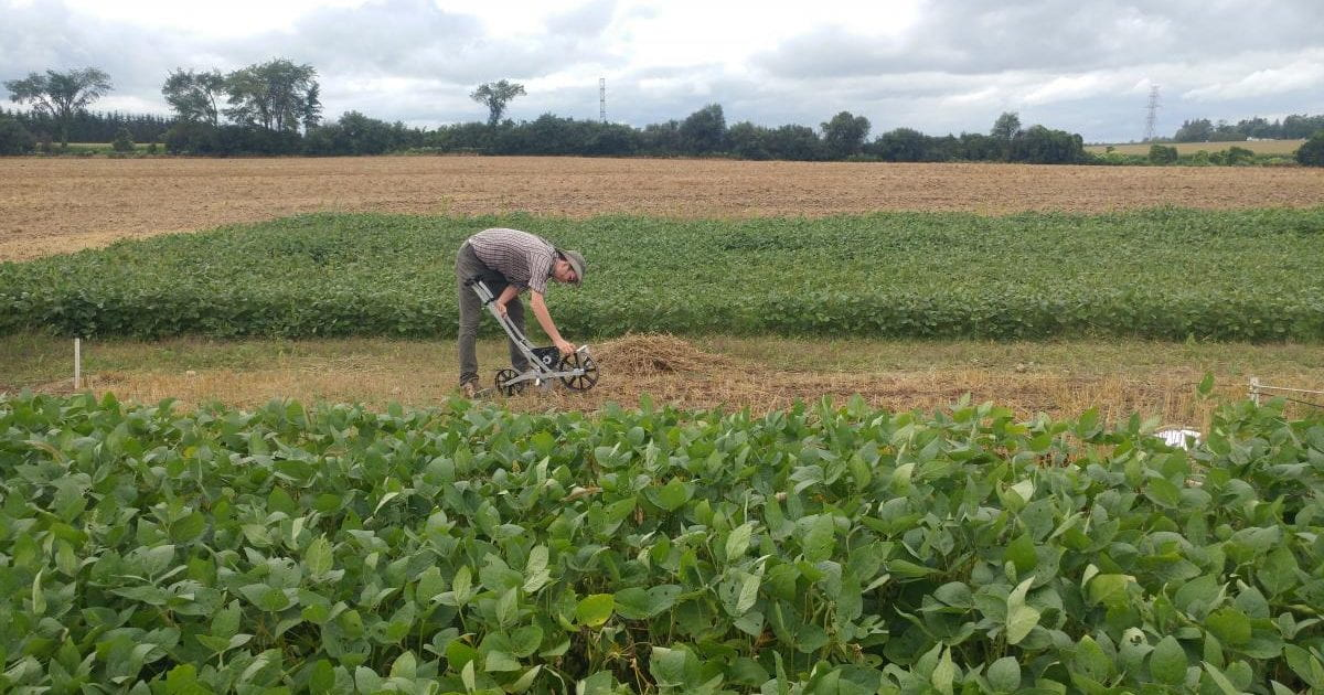 Working in a soy field