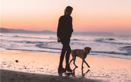 Dog and person walking on beach at sunset