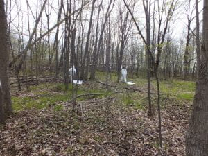 Image of two people in white gear in a forest.
