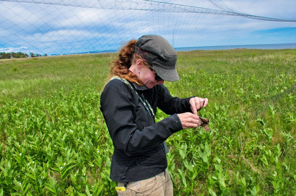 Image of Amy Newman in a field removing a bird form a net.