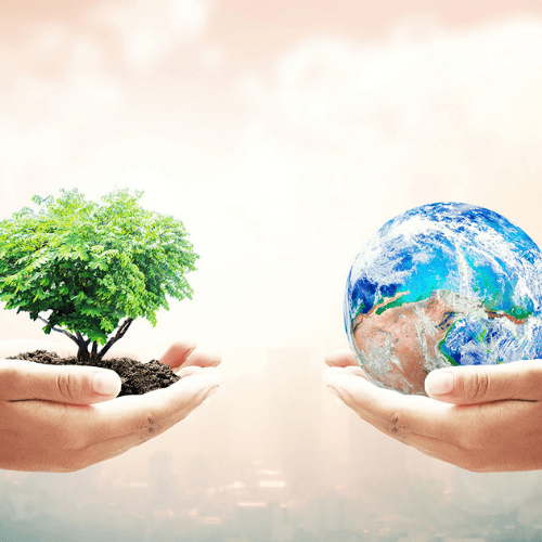 Image of hands holding a tree and the earth.