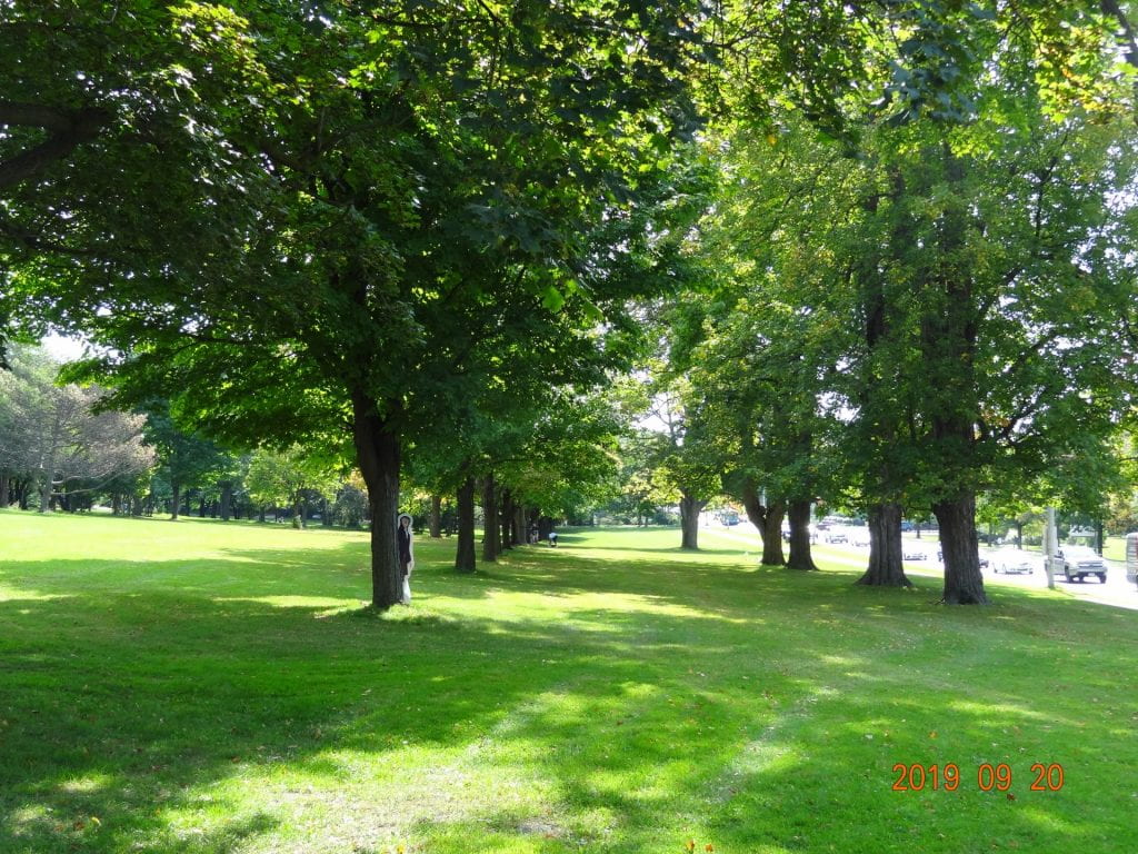 Avogadro life-size cut out behind a tree with many large green trees in a row in summer