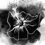 A black and white watercolour image of a hibiscus flower, petals open and stamen bursting with pollen.