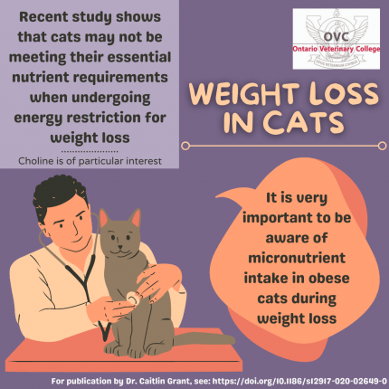Cut the Fat But Support the Cat