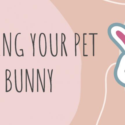 Feeding Your Pet Bunny