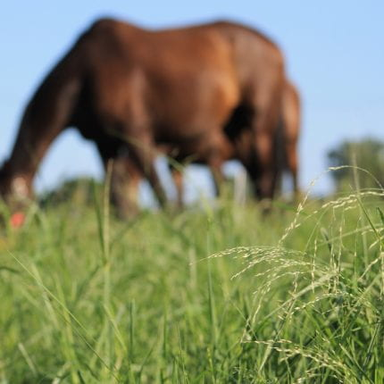 Transitioning your horse from hay to grass safely this spring.
