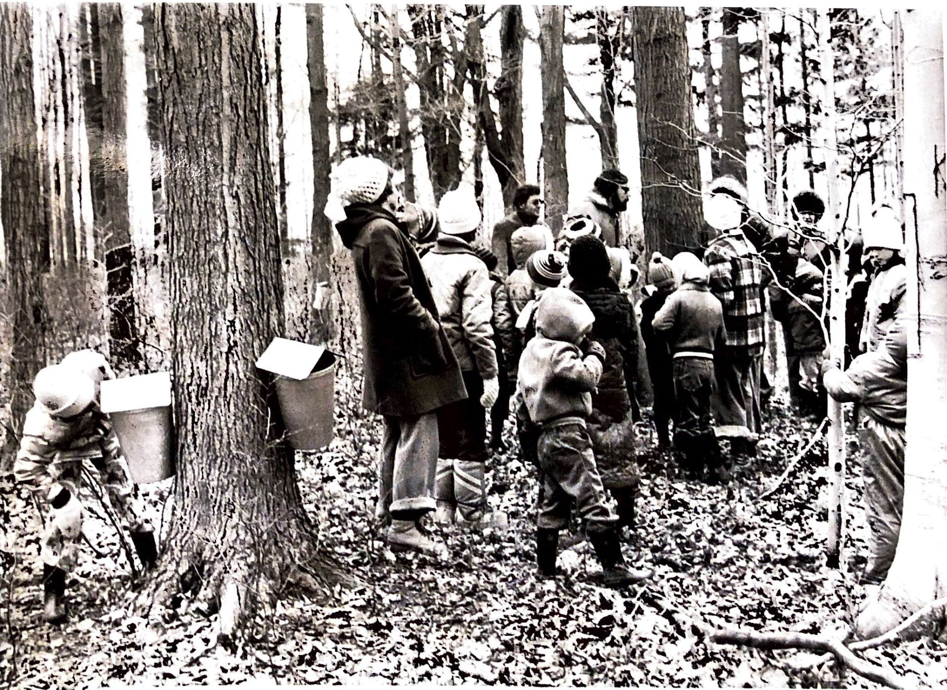A group of adults and young children stand in the woods, bundled up for winter. There is no snow on the ground. The children look towards the group leaders, watching a maple syrup demonstration. On one tree being the group, two maple syrup gathering buckets are tapped to the tree trunk. A young child leans over, closely looking at the contents of the bucket.