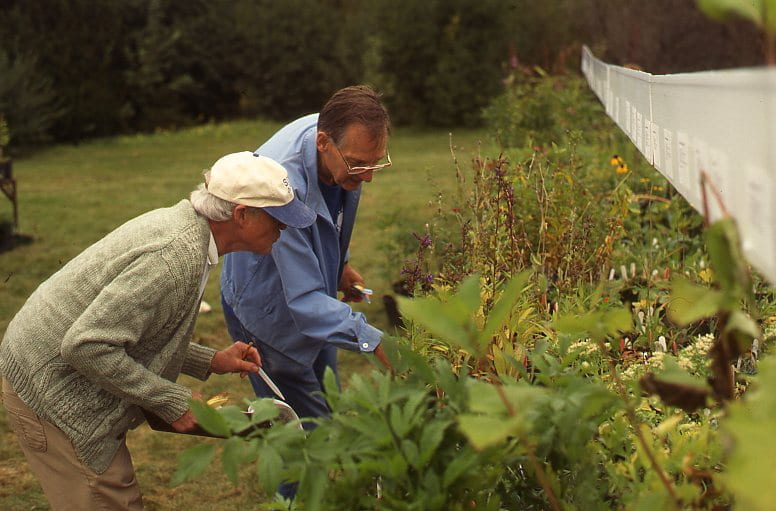 Two men lean over to place price tags on plants. The man closest to the camera wears a green long sleeve shirt, a cream and blue baseball cap, and cargo pants. The man behind him wears a blue long sleeve shirt and glasses.