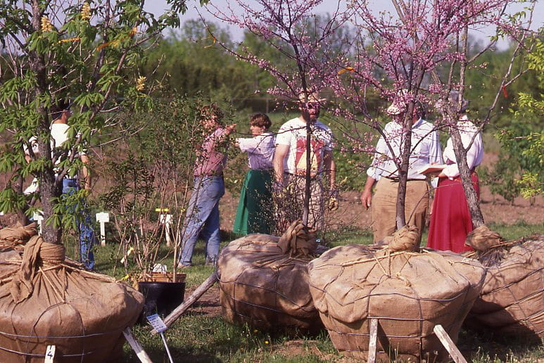 A group of people stand behind a selection of saplings. A sapling on the right has green leaves, while the one in the centre and the one on the right has pink buds. All saplings have their roots tied in a brown bag and are propped up for display.