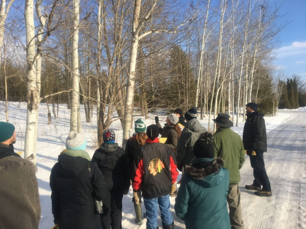 A group of individuals gather around the side of a snow-covered road to look at birch trees. A woman in the middle of the crowd points up at the trees and the others look where she is pointing.