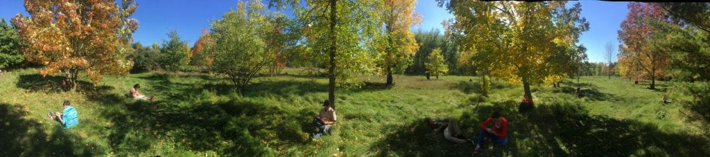 Five individuals sit spead out on a grassy lawn. They sit near and under maple trees. They all are completing workbooks that are resting in their laps. It is a bright sunny day.