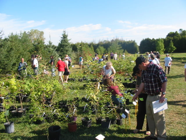 A crowd browses through rows of potted plants in a field on a sunny day.