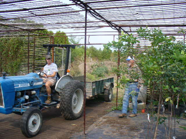 A man on a blue tractor with a trailer attached pulls plants out of a greenhouse. A man in a plaid shirt stands nearby watching.