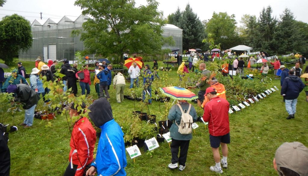 A group of people browse through rows of potted plants for sale in a large field. Many people are dressed for the rain or hold umbrellas.