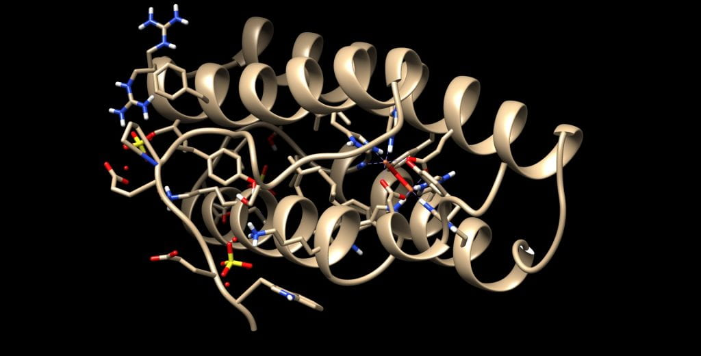 Chimera rendering of Hemerytrin the oxygen transport protein in the marine invertebrates.
